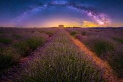 Lavendel-meets-Milkyway_klein