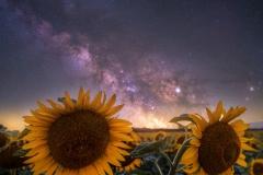Sun-and-stars